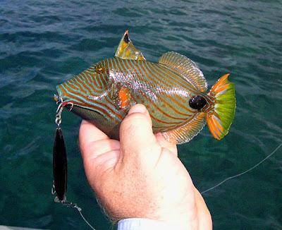 Xstreemfishing com blog a great morning fishing for Leather jacket fish