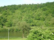 Main-Blick im Sommer