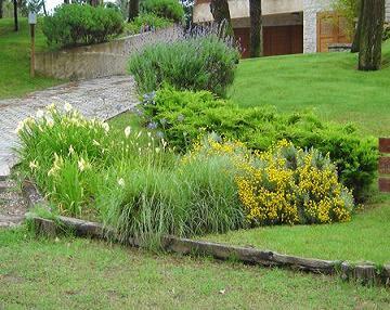 Todo jardines septiembre 2009 for Coniferas de jardin