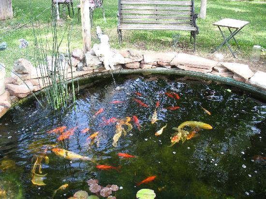 Todo jardines los peces en el jardin acu tico for Como hacer un estanque para peces koi