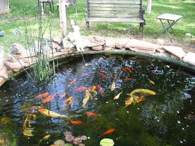 Todo jardines octubre 2010 for Plantas para estanque peces koi