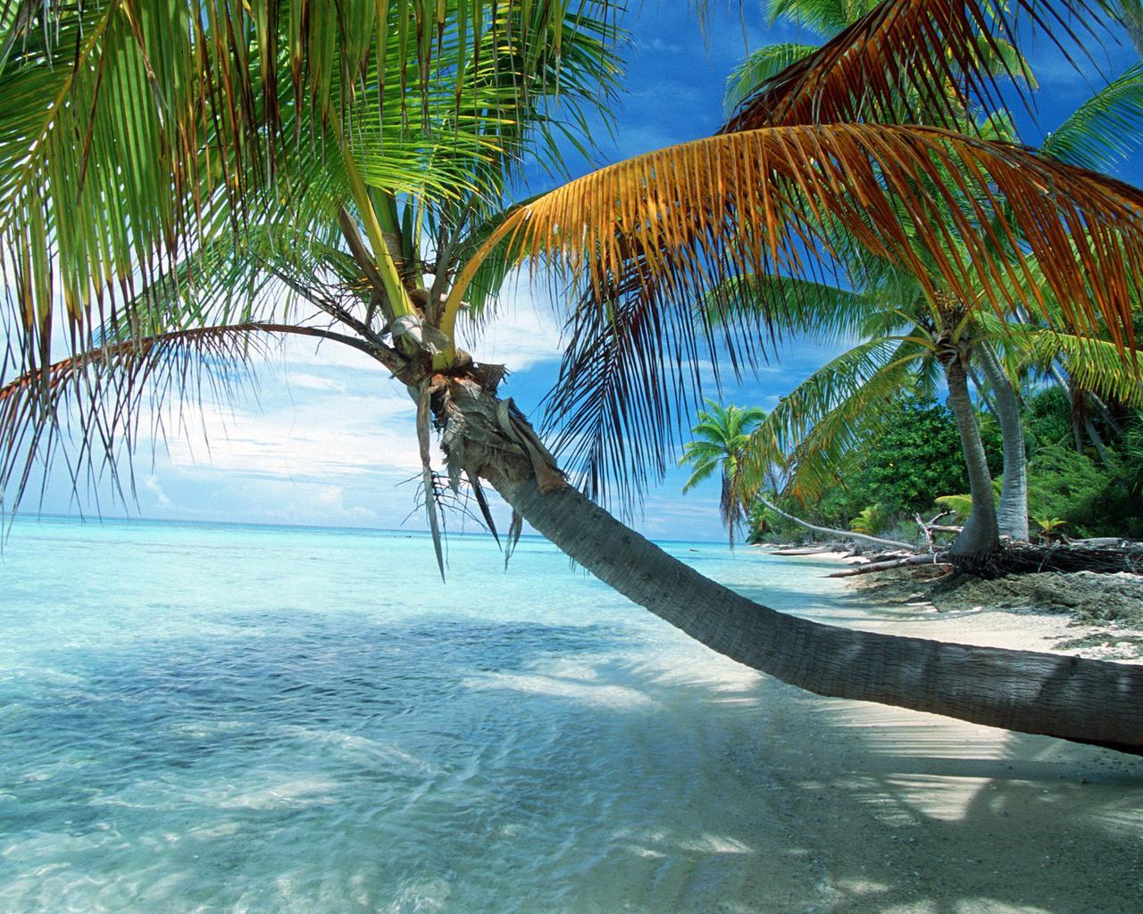 http://2.bp.blogspot.com/_T5UlQql8sHM/TG1oi9br6aI/AAAAAAAACbA/OXcI0-GIdSw/s1600/beach.jpg