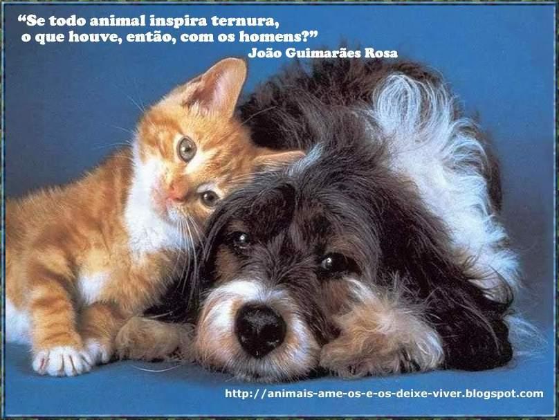 Em Defesa Dos Animais Frases