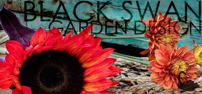 Black Swan Garden Design