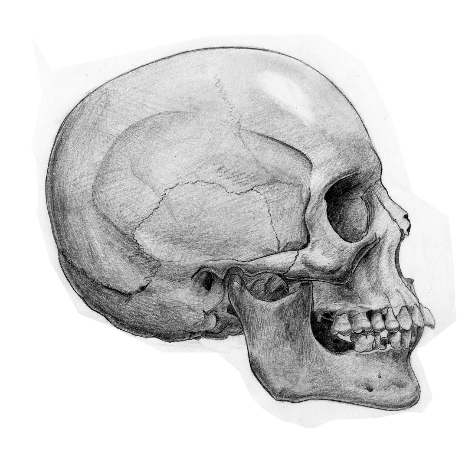 Krick s Art  Skull