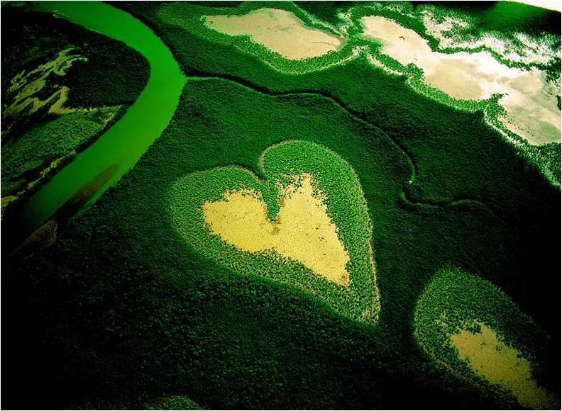 http://2.bp.blogspot.com/_T860nLWxEE4/S6953KJQerI/AAAAAAAACw8/7sJqQacftac/s1600/multiflorafernandopolis,+natureza+divina.jpg
