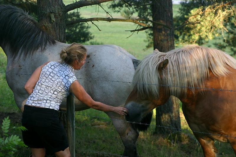 Kajsa hälsar på hästarna - Thorins Trädgård