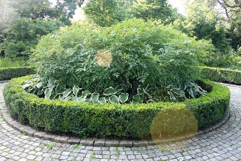 Trädgårdsblogg: Thorins Trädgård