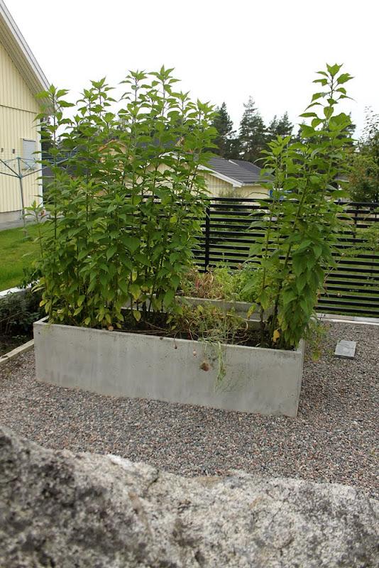 Trädgårdsblogg Thorins Trädgård