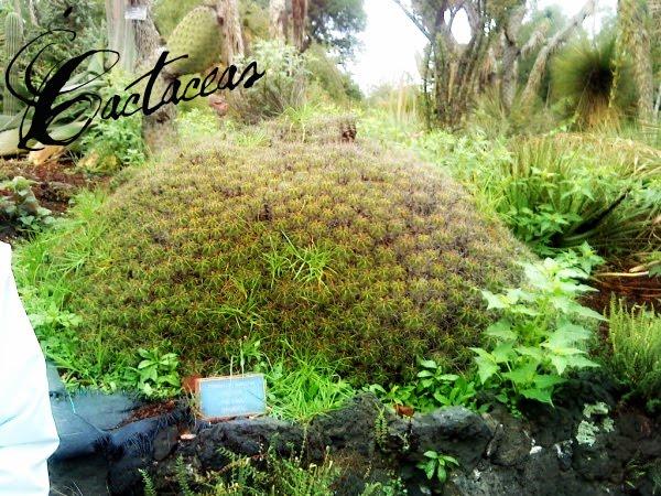 en zonas desérticas,y poseen una estructura vegetativa que las vuelve