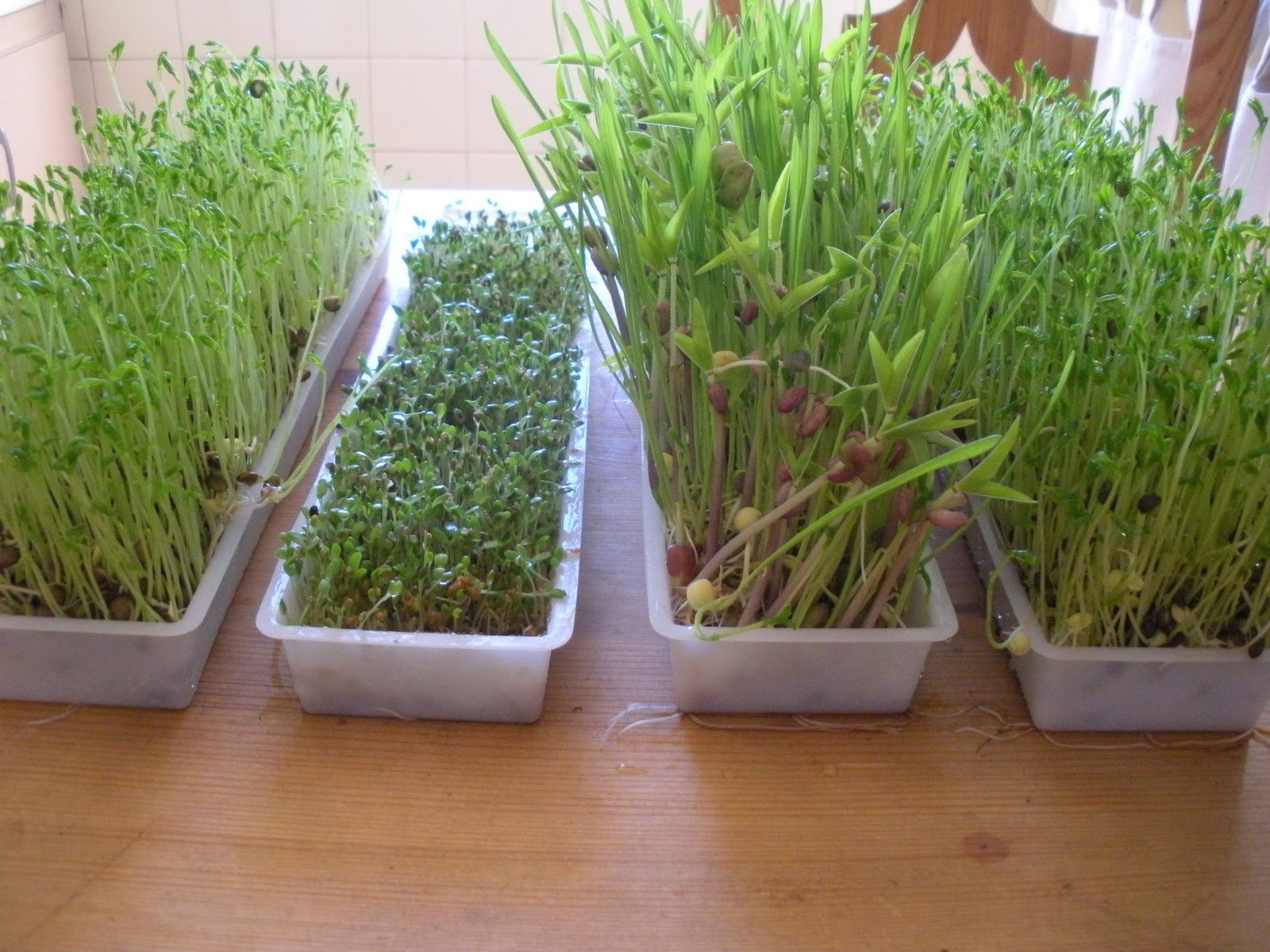 easy green sprouting machine