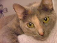 My Cat Zoi