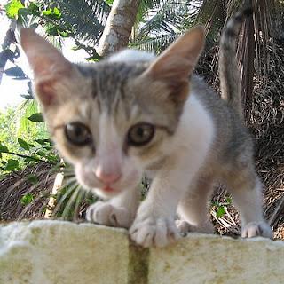 Random skinny cat I met on my travels