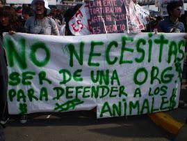 DOMINGO 8: PROTESTA EN ACHO
