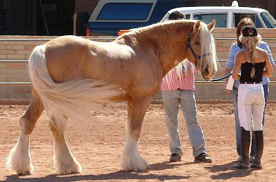 world's beautiful horses breeds