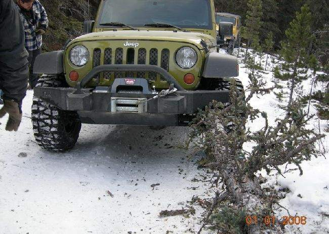 Christmas tree against Jeep
