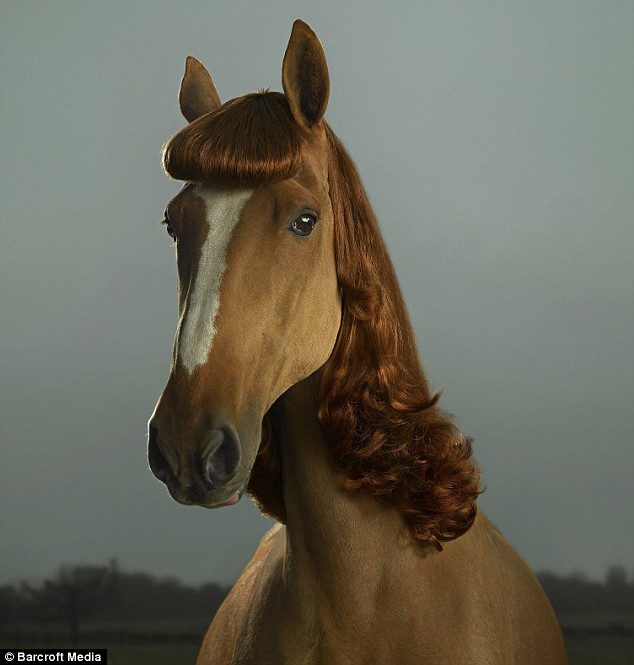 The Hair Extension Expert Horse Hair Extensions