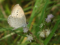Butterfly and dewdrops