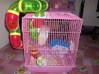 my hamster (junsu )
