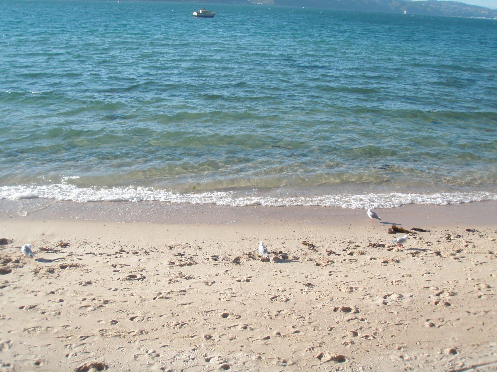 Café Chick s Project 365 Day 246 Seashore