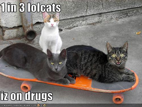 [funny-pictures-one-of-your-cats-is-on-drugs1.jpg]