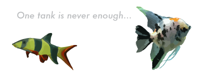 An Aquatic Obsession