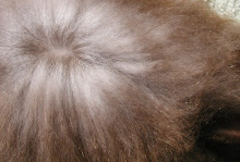 Chocolate Satin Angora