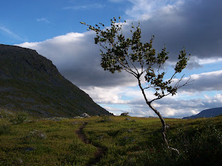 Lonely Tree on the Kungsleden