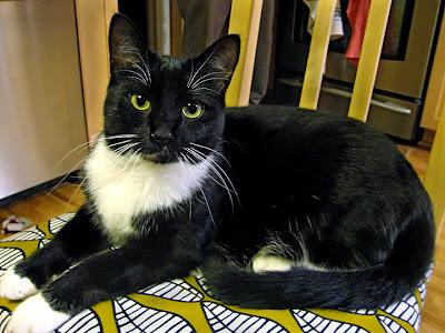 Matt's cat, Lucy