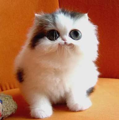 Imagens de gatos. Fotos de gatos e gatinhos. Lindas