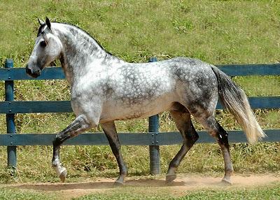 Cavalo - Os Mais Belos Garanhões das Melhores Raças de ...
