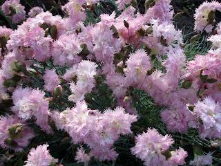 Мохнатый цветок