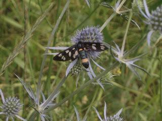Полосатый мух