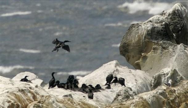 [Guala+seabirds]