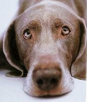 lista cabinete veterinare iasi