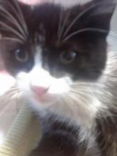 El gato de Guillermo (regalo de cumple)