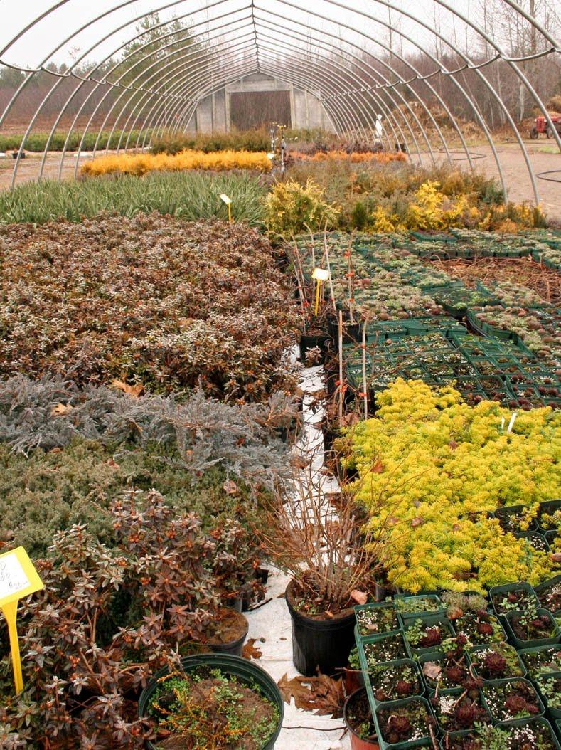 Bloomingwriter: Gardening in Nova Scotia: The End of November ...