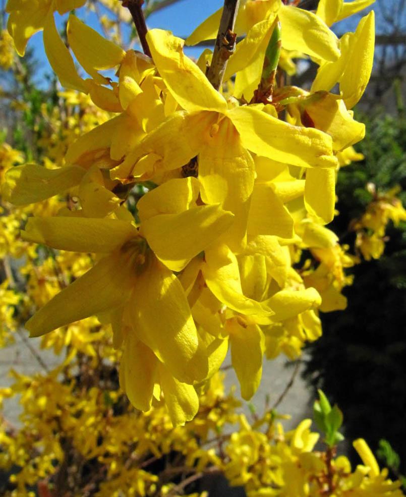 Bloomingwriter Gardening In Nova Scotia Coaxing Spring