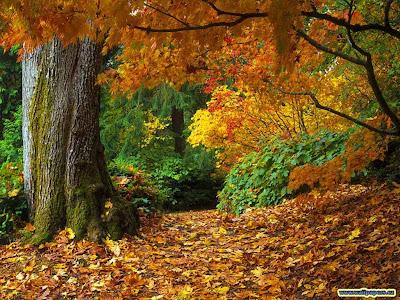 Geschichte meines Lebens  October 2008