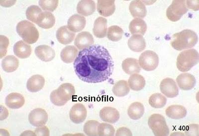 leucocito eosinófilo