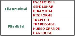 nomenclatura de los huesos del carpo