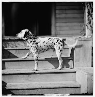 the Dalmation, Library of Congress, Prints & Photographs Division, Civil War Photographs, [reproduction number, LC-DIG-cwpb-01995.]