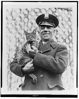 Tige the White House cat, Library of Congress, Prints & Photographs Division, [reproduction number, LC-USZ62-131880
