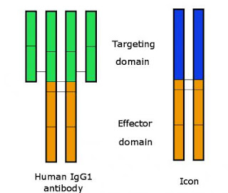 Caption: Schematic representation of the Icon, which has a region for targeting the molecule and a region for triggering immune destruction of the cells targeted. Credit: Garen/Yale. Usage Restrictions: with credit given.