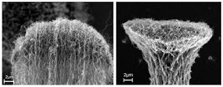 Caption: Side view of a carbon nanotube bundle end before (left) and after (right) densification. Credit: Rensselaer/Liu, Usage Restrictions: Please run credit line.