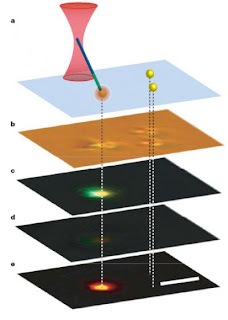 In a demonstration of the nanowire light source's fluorescence mode, a nanowire in the grip of an infrared beam was touched to a fluorescent bead causing the bead to fluorescence orange at the contact point. Figure a shows the experimental set up with the pair of beads on the right as control; b is a bright-field optical image of the beads, with the nanowire in contact with the leftmost bead; c is a color CCD fluorescence image showing green light emission from the nanowire and the orange emission from the bead; d is a control image of the same beads with infrared radiation but no trapped nanowire; and e is digital subtraction of d from c. Credit: Peidong Yang, Jan Liphardt, et. al. Usage Restrictions: None