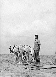 Young Negro farmer working on the field