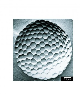 Micrometer Size Bubble