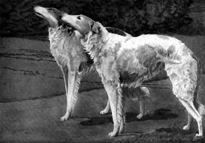 Russian Wolfhound or Borzoi