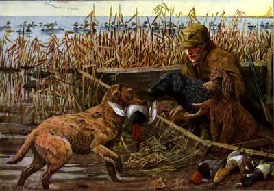 Labrador and Chesapeake Retrievers Irish water spaniel